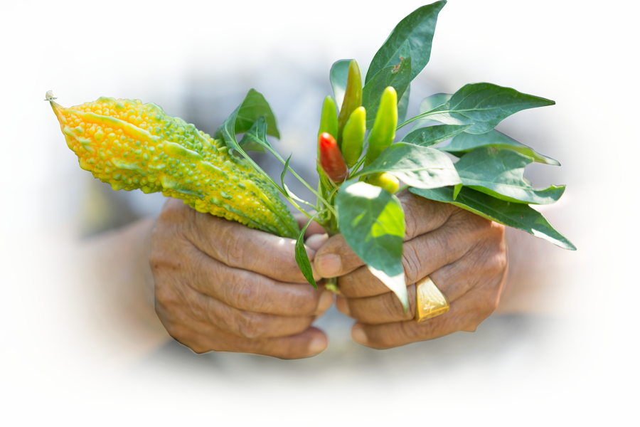 hand holding plant nepalese plant